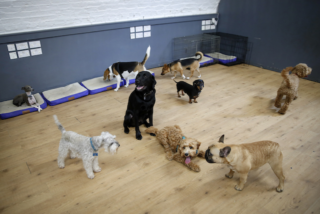 dog_daycare_north_west_london